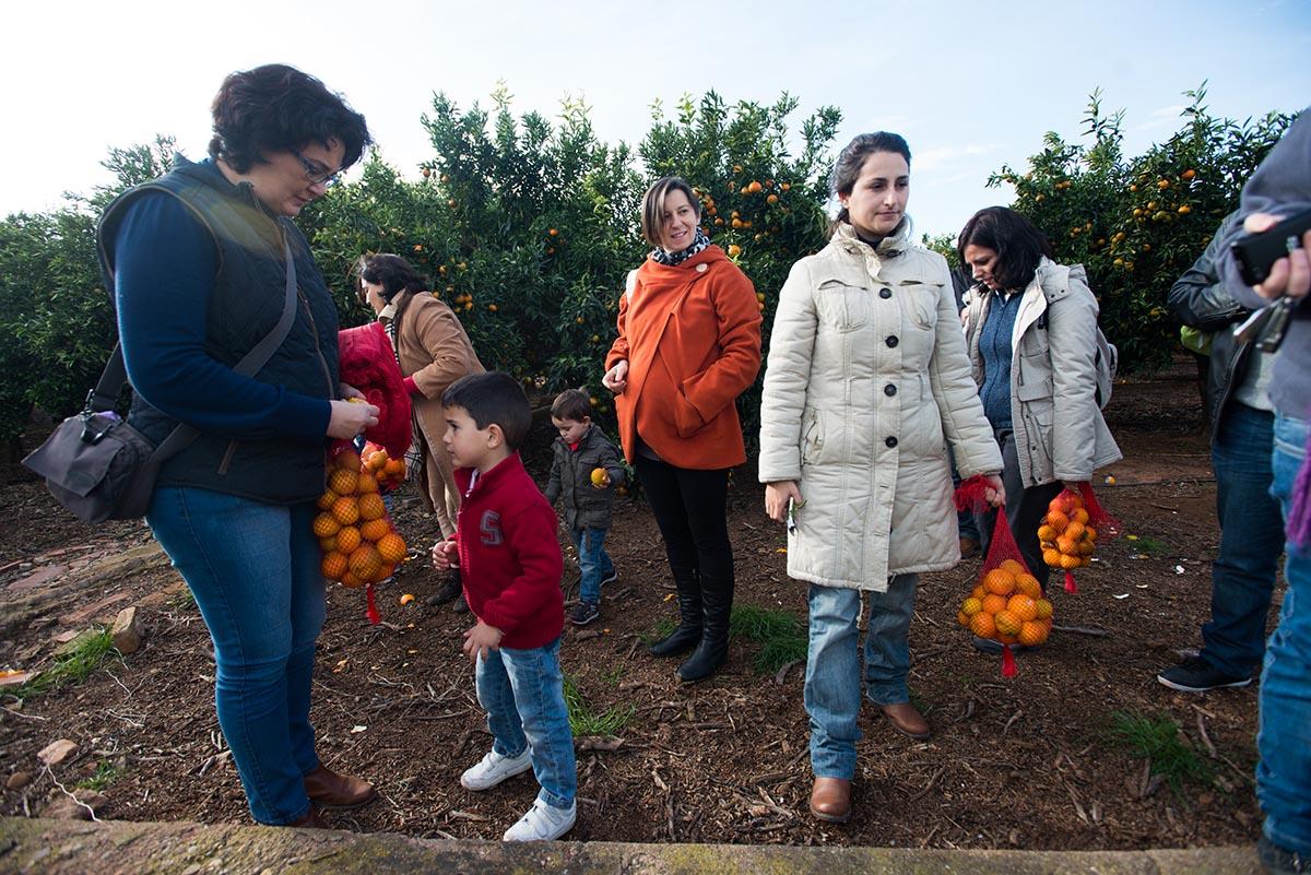 Ruta de las naranjas y las mandarinas de Villareal (Castellón)
