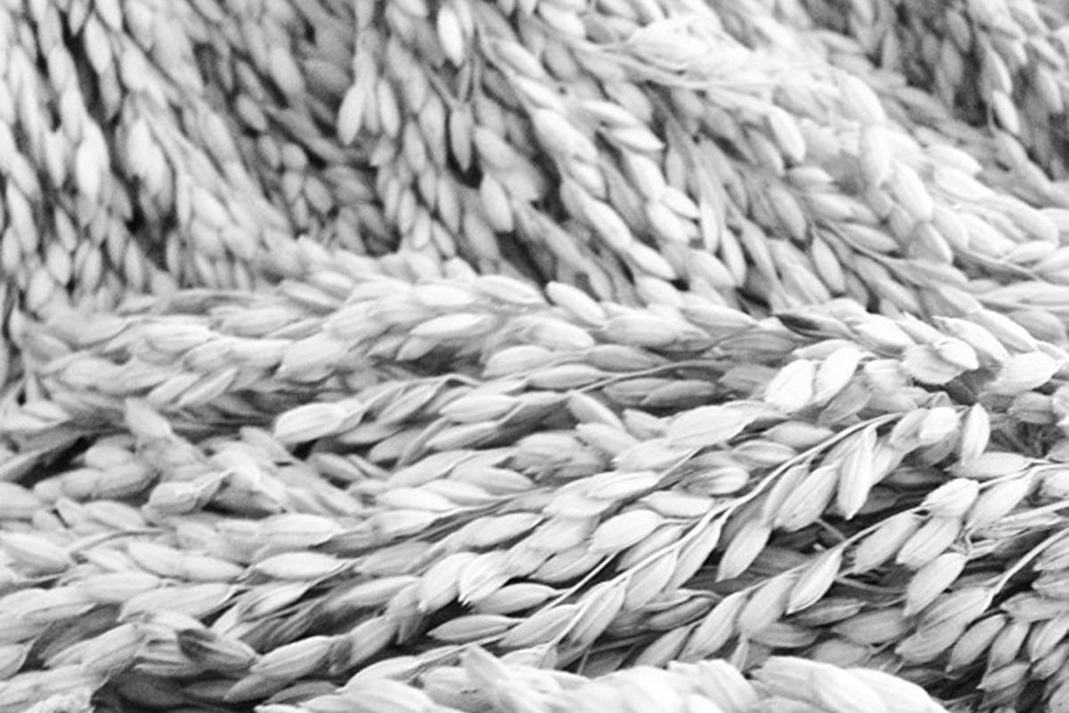 Ruta del arroz. Parque Natural de La Albufera